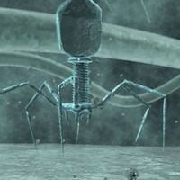 Science and Society - Bacteriophages - Humanity's greatest hope in combatting the rise of the superbug