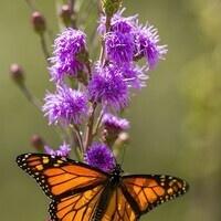 2018 Pollinator Summit