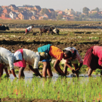 Climate change and food security in the Asia-Pacific: Response and resilience