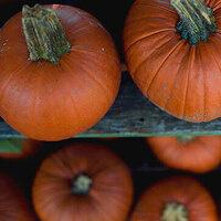 4th Annual Pumpkin Drop