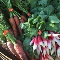Desert Farming Initiative at Riverside Farmers Market