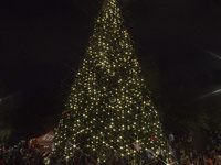 97th Annual Tree of Light