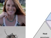 BioSci Seminar - Courtney Murdock, UGA, Estimating arbovirus transmission in a human-modified world