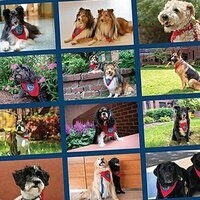 Meet Them at the Gift Shop—PET Therapy Dogs Featured in 2020 Calendar