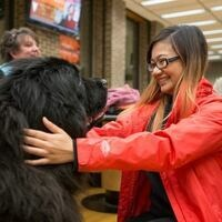 Newfoundland Dogs at Founders Library