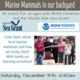 Talk: Marine Mammals in Our Backyard