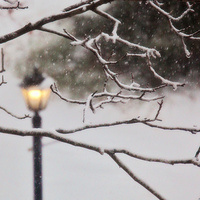 Come In from the Cold: MIT Humanist Holiday Celebration