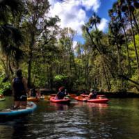 Sea Kayaking & Snorkeling with Manatee Trip