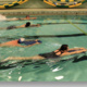 Open Recreation Swimming