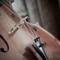 Musicale: Performance Plus Series