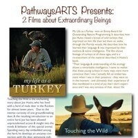 Film Night: My Life as a Turkey, and Touching the Wild.