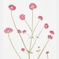 Bespoke Botanicals