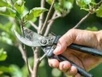 Hands-on Gardening: Perfect Pruning with Mark Arena