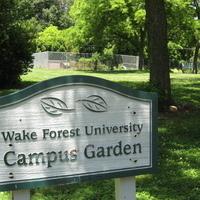 Volunteering @ Campus Gardens!