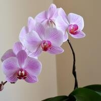 Orchid Inspiration: Grow Beautiful Orchids at Home