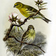 Audubon's Intro to Bird-Friendly Gardening
