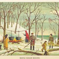 A Sweet Stroll Through Maple History