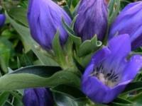 Spring Public Plant Sale