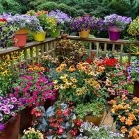 STEM Container Gardens