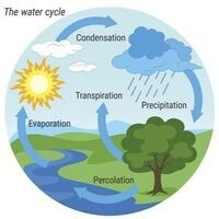 Little Scientist - Terrariums/Water Cycle