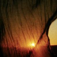 Alternative Cinema: The Sea in their Blood, 350MYA, and Territory