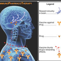 Wolk Lecture: Immunopharmacotherapy for the Treatment of Substance Abuse Disorders