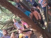 Great Green Adventure Camp