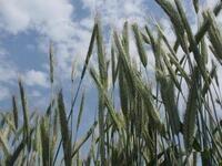 5th Annual Hudson Valley Value-Added Grain School