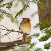Winter Birding at Black Hill