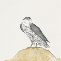 Elisabeth Frink: Mountain Hawks & Other Creatures | Art Galleries