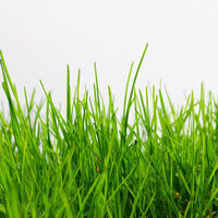 A Beautiful Lawn Organically