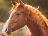 Clemson Extension Equine Lunch & Learn