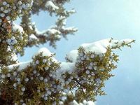 Garden Walk: Spruce Up Your Conifer Knowledge