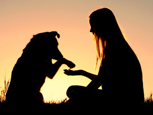 Animal Communication for Reiki Practitioners