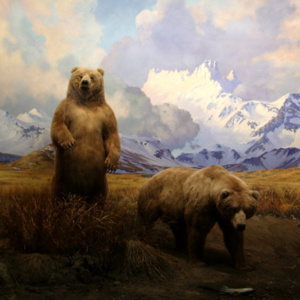 Bear - A Public Screen by Deke Weaver