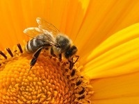 The Bees' Knees: Yoga for Gardeners Pop Up Class