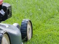 Cultural Management Practices for Southern Lawns
