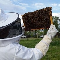SOU Bee Team