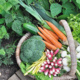 Grow With Be Well - Employee Gardening