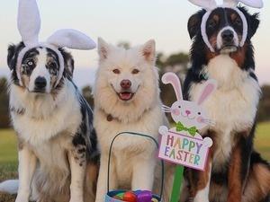 Dog Gone Egg Hunt