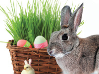 *CANCELLED Bunny Brunch