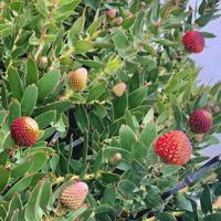 Spring Plant Sale April 13, 2019 at UCSC Arboretum