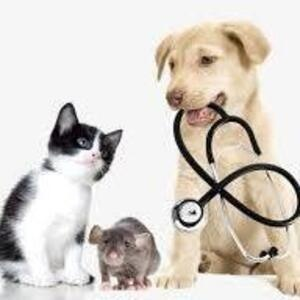 CANCELED: How Veterinarians Work with Pharmacists
