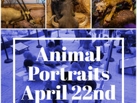 Animal Portraits Children's Workshop