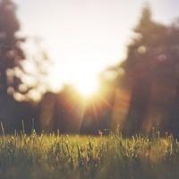 GICES: Turfgrass Disease