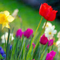 Spring Into Action!