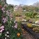 Annual Earth Day Garden Party