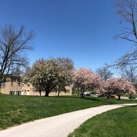 Spring Flowering Tree Tour- Self Guided