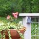 Backyard Habitat Garden Tour