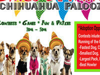 2nd Annual Chihuahua Palooza- Cinco De Mayo